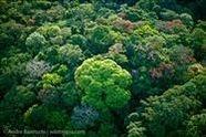 palm oil free rainforest