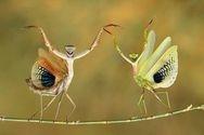 preying mantis rainforest