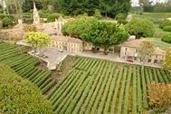 les vignes de St Emilion