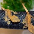 Pittsburgh Reptile Show And Sale