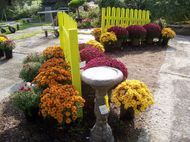 Fall Mums and Birdbaths