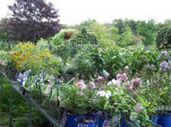 Wide Variety of  Perennials