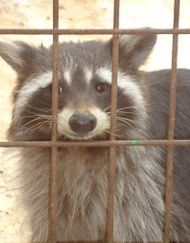 Animal Control Florida Nuisance Trappers