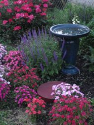 Birdbath with Sweet William and Salvia