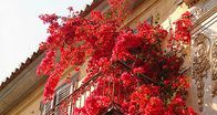flowers, pure red, by greek2m