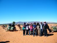 Group Camel Safari Treks are our Speciality. Outback Australian Camels, Flinders Ranges, South Australia