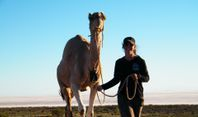 Camel Expedition Training Curse. Outback Australian Camels, Flinders Ranges, South Australia