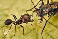 antas in rainforest land