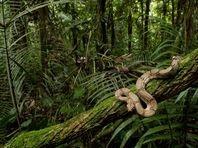 snake illegal wildlife trade