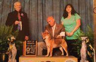 showboat kennels winning awards