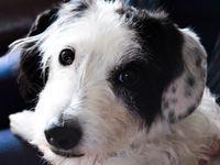 Dog walker in Flatbush