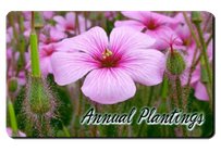 Annual Plantings Buffalo NY