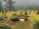 Support beekeeping!