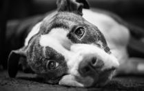 Dogs need equal amounts of enrichment and rest for best mental and physical performance