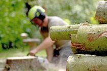 Tree Surgeons leamington spa