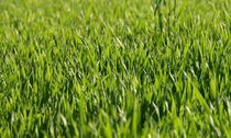 lawn seeding, quality mowing, best prices