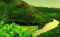 rainforest palm oil free
