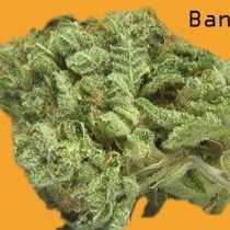Buy Marijuana online high buds 420