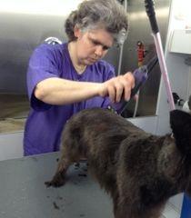 Jennifer grooming Sebastian