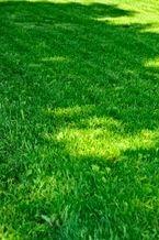 Greenskeeping and yard maintenance