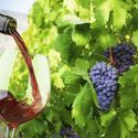 small group santorini wine tasting and vineyard tour, by Greek2m