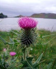 SCOTLAND BELL TENT HIRE