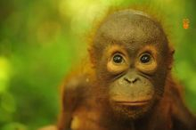 palm oil free certification trademark for orangutans