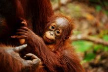 NAMES FOR PALM OIL HIDDEN