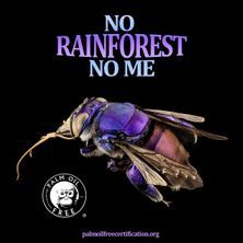 orchid bees need rainforests