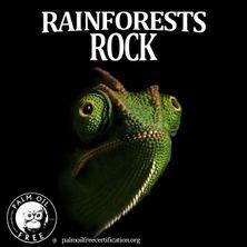 chamelion rainforest reptile