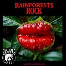endangered plants in rainforests