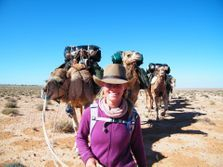 Outback Camel trekking in South Australia, Flinders Ranges. Camels in Australia. Outback Australian Camel Safaris