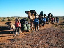 Camel Treks in the Flinders Ranges South Australia. Outback Australian Camels. Australia's premier camel safaris, treks tours and expeditions.