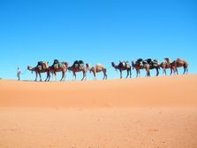 Desert Camel Treks. Outback Australian Camels. Australia's Premier Camel Safaris, treks, tours and Camel Expedition Training.