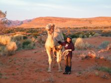 Camel Trekking Expedition Training. Outback Australian Camels Safaris, Treks, Tours, Expeditions Holidays Camping Adventures