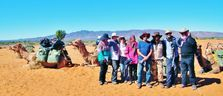 Group Camel Treks are our speciality. Outback Australian Camels Treks Tours Safaris and Expeditions