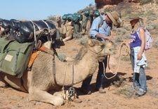 Outback Australian Camels. Russell Osborne. Tara Lea