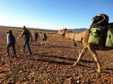 Group Camel Safaris a Speciality, Outback Australian Camels