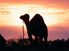 Breathtaking Scenery, Outback Australian Camels, Australian Adventures, Desert Camel Expeditions,