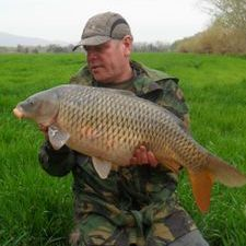 Common Carp fish River Ebro