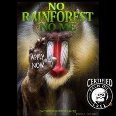 mandrills need rainforests