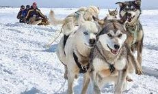 Yellowknife dog sledding aurora packages
