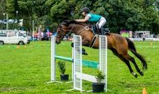 Showjumping horse competition
