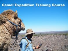 Exploring the Wilderness with Outback Australian Camels