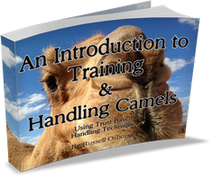 Camel Training Introduction Brochure