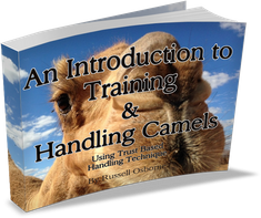 Camel Training and Camel Handling