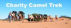 Camel Trekking in the Flinders Ranges, South Australia