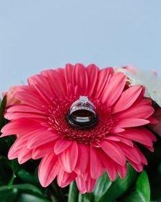 coral gerber daisy bouquet
