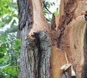 Scinto technicians assess your tree damage, and execute flawless removal
