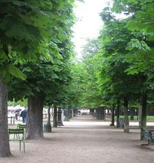 "src=""australian womens travel.jpg alt=womens travel,trees in line, jardin du tuileries , paris france """